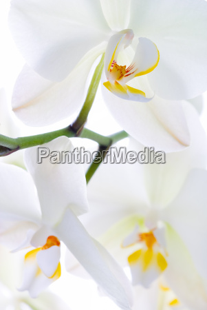 orchid, freshness. - 1252053