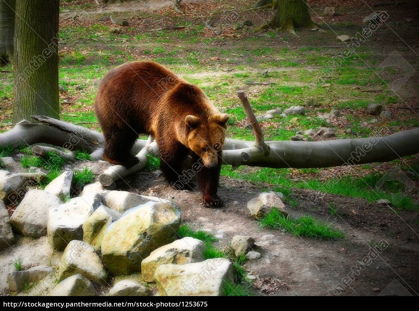 brown, bear - 1253675
