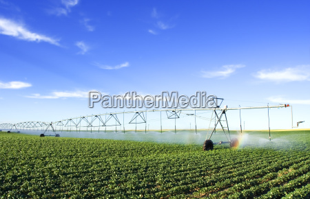 herramienta agricola