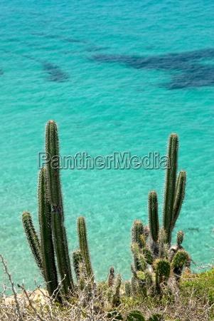 cacti against a blue ocean background