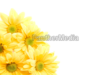 beautiful, beauteously, nice, isolated, flower, flowers - 1266197