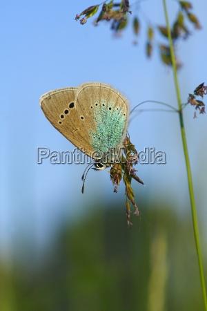 butterfly summer meadow