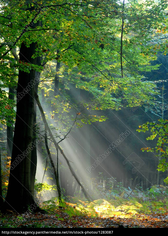 beams, of, light, pour, through, the - 1283087