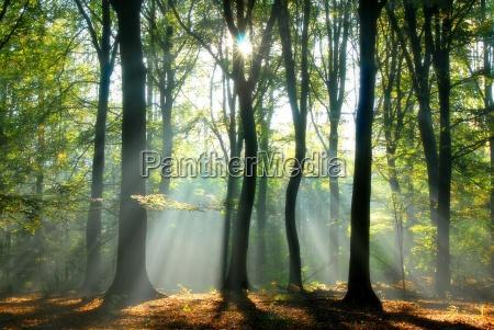 tree, sunlight, zen, forest, nature, fall - 1283123