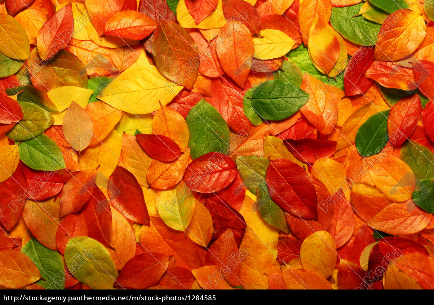 autumn, leaves, background - 1284585