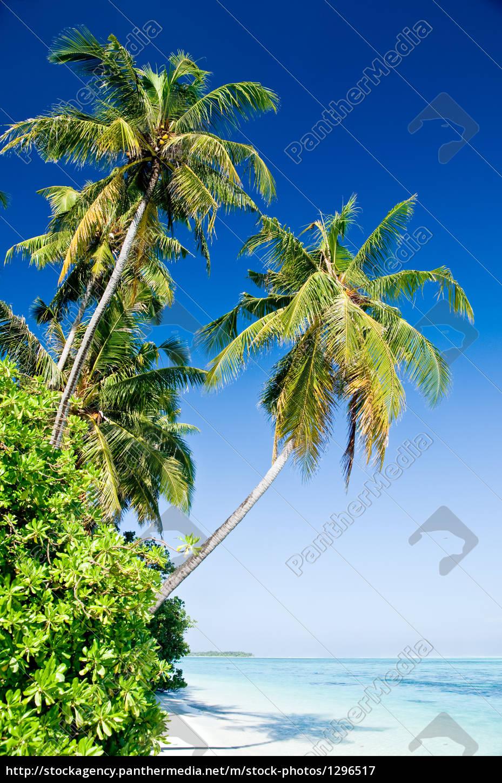tropical, beach - 1296517
