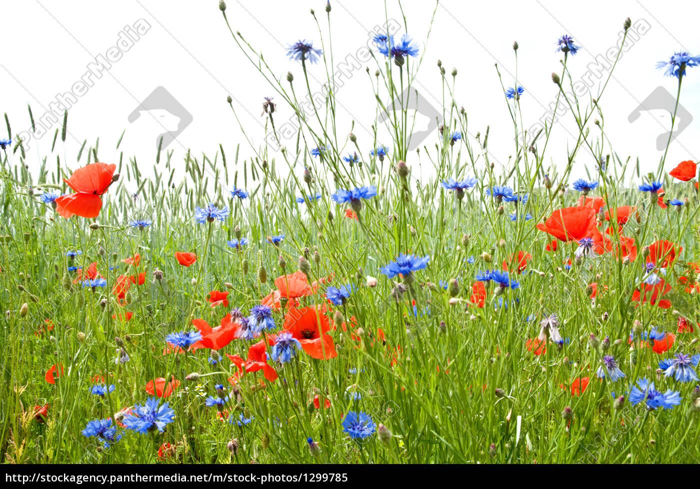 summer, meadow, 1 - 1299785