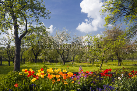 flowers and orchard