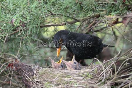 pajaro aves los padres cuidado nido