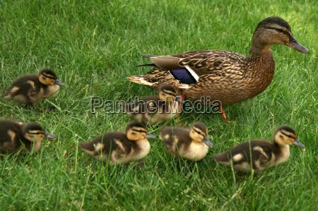 duck, tour - 1319801