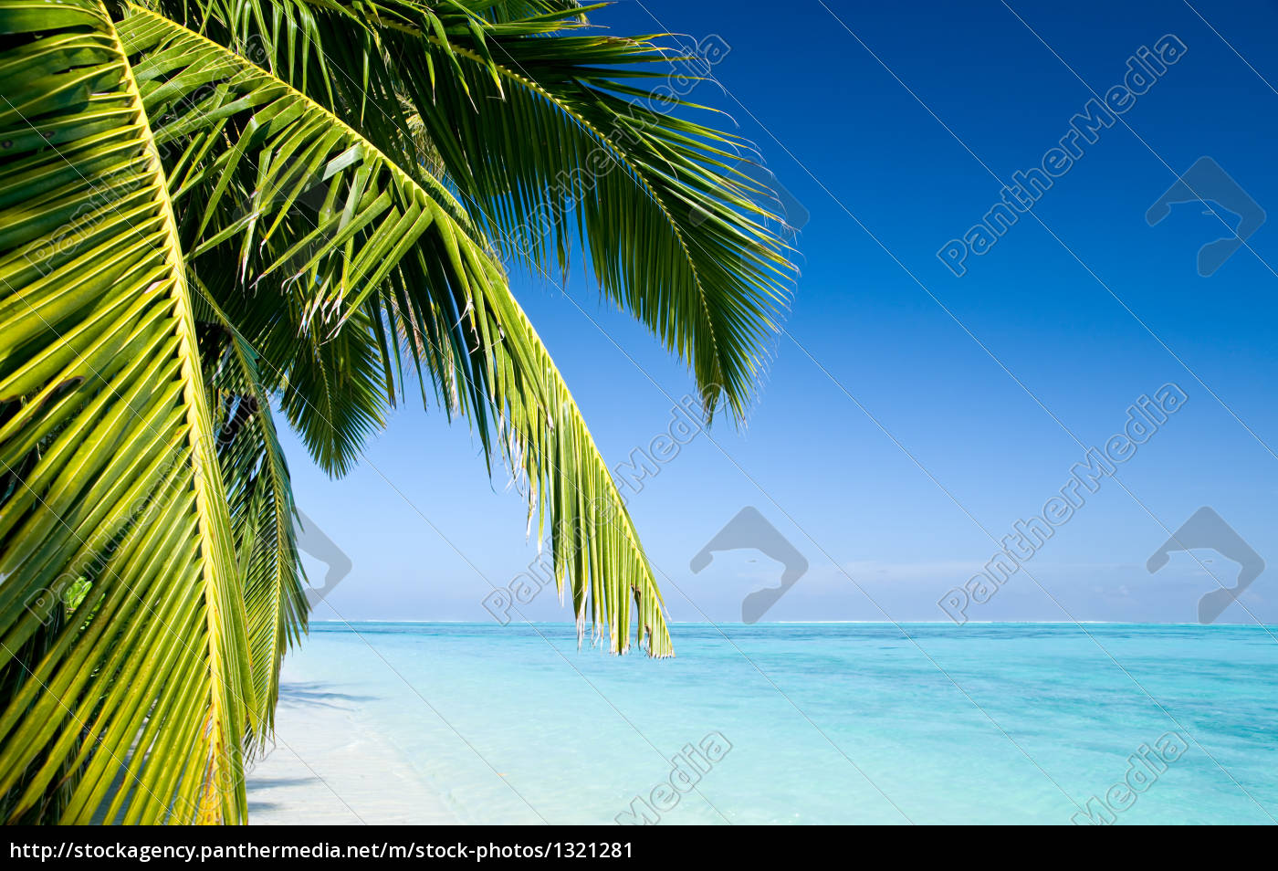 beach, with, palm, trees - 1321281