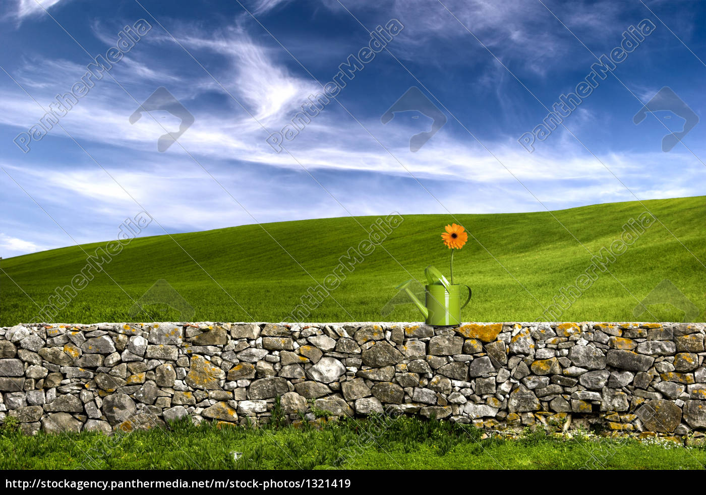 flower, in, the, green, land - 1321419