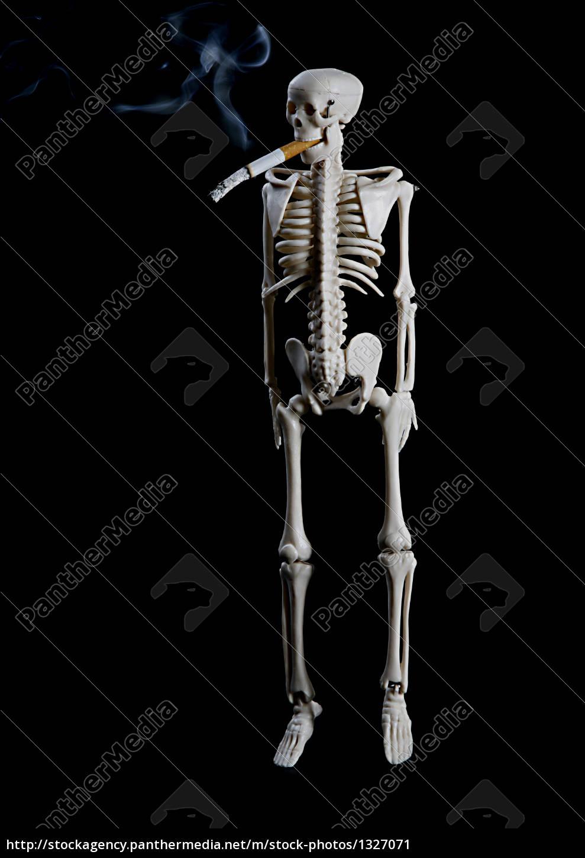 skeleton - 1327071