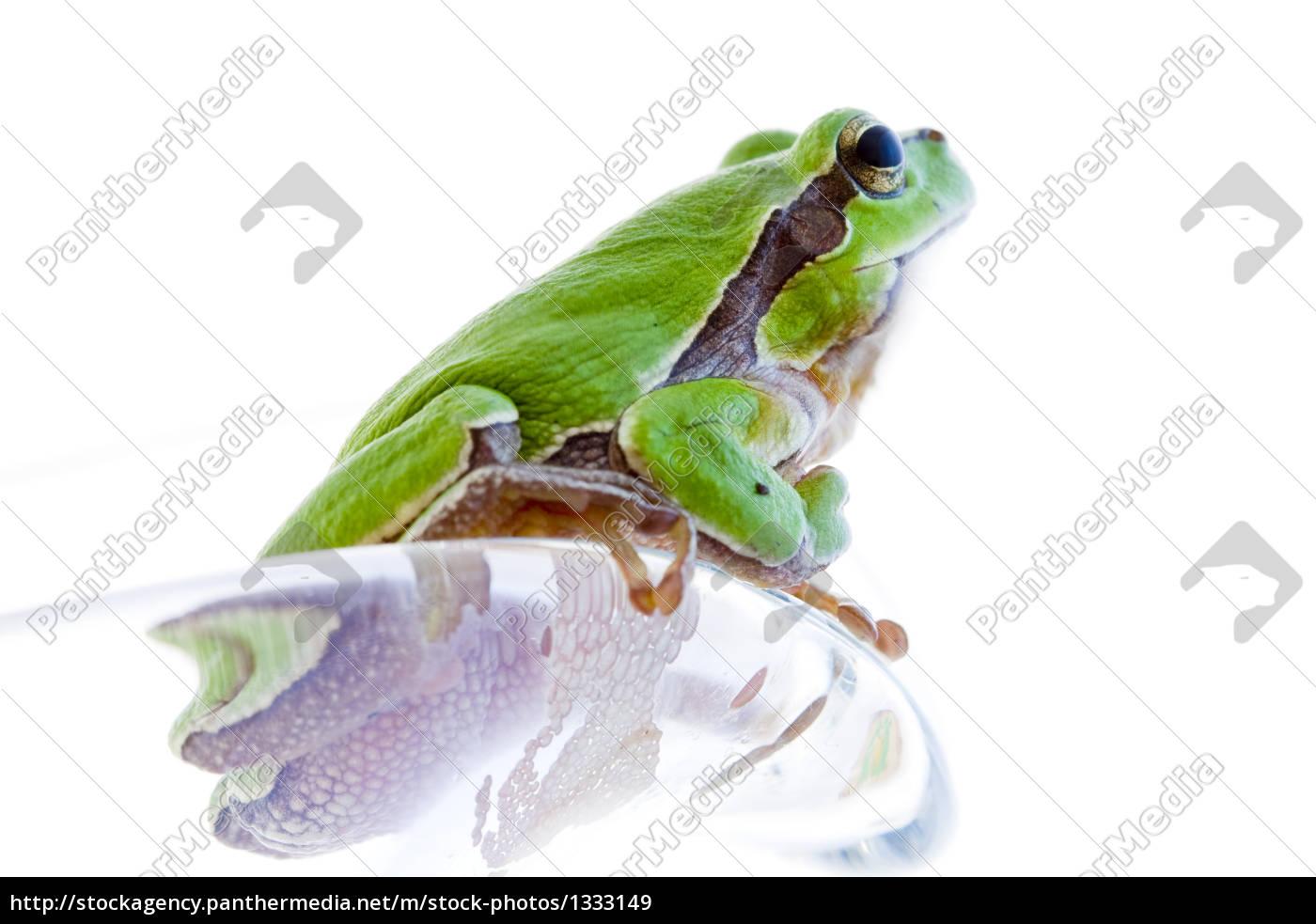 tree, frog - 1333149