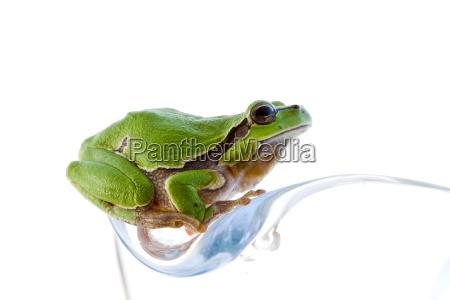 tree, frog - 1333155