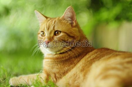cat, phosphorus - 1334097
