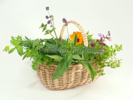 garden, herbs - 1334765