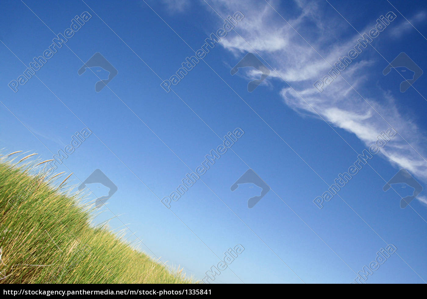 grasses, in, the, summer, breeze - 1335841