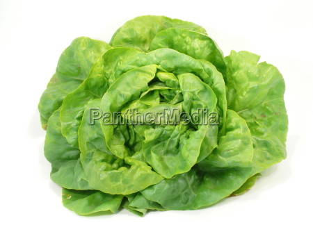 lettuce - 1339551