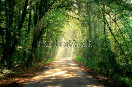 beam path