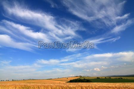 golden fields in the wind