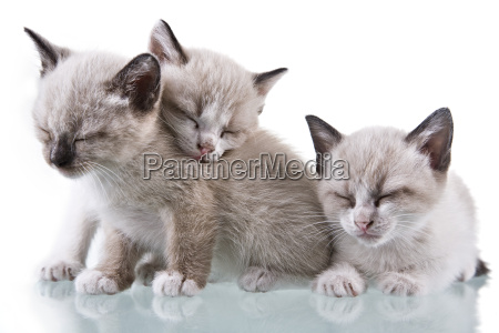 baby, kittens, sleeping - 1344753