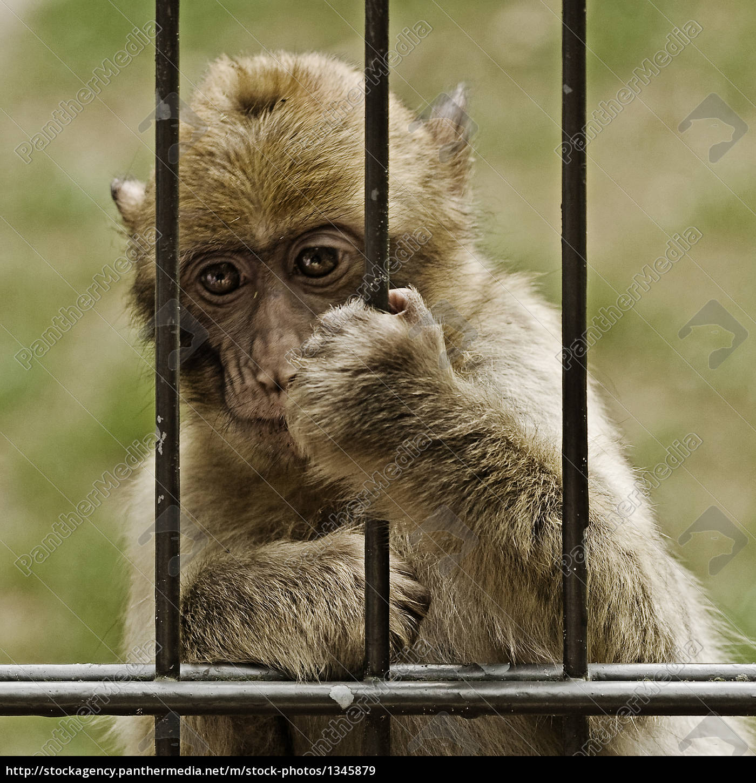 behind, bars - 1345879