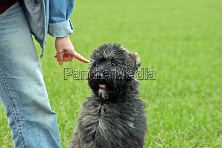 dog training with a finger