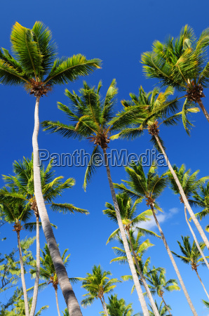 palms, on, blue, sky - 1346841