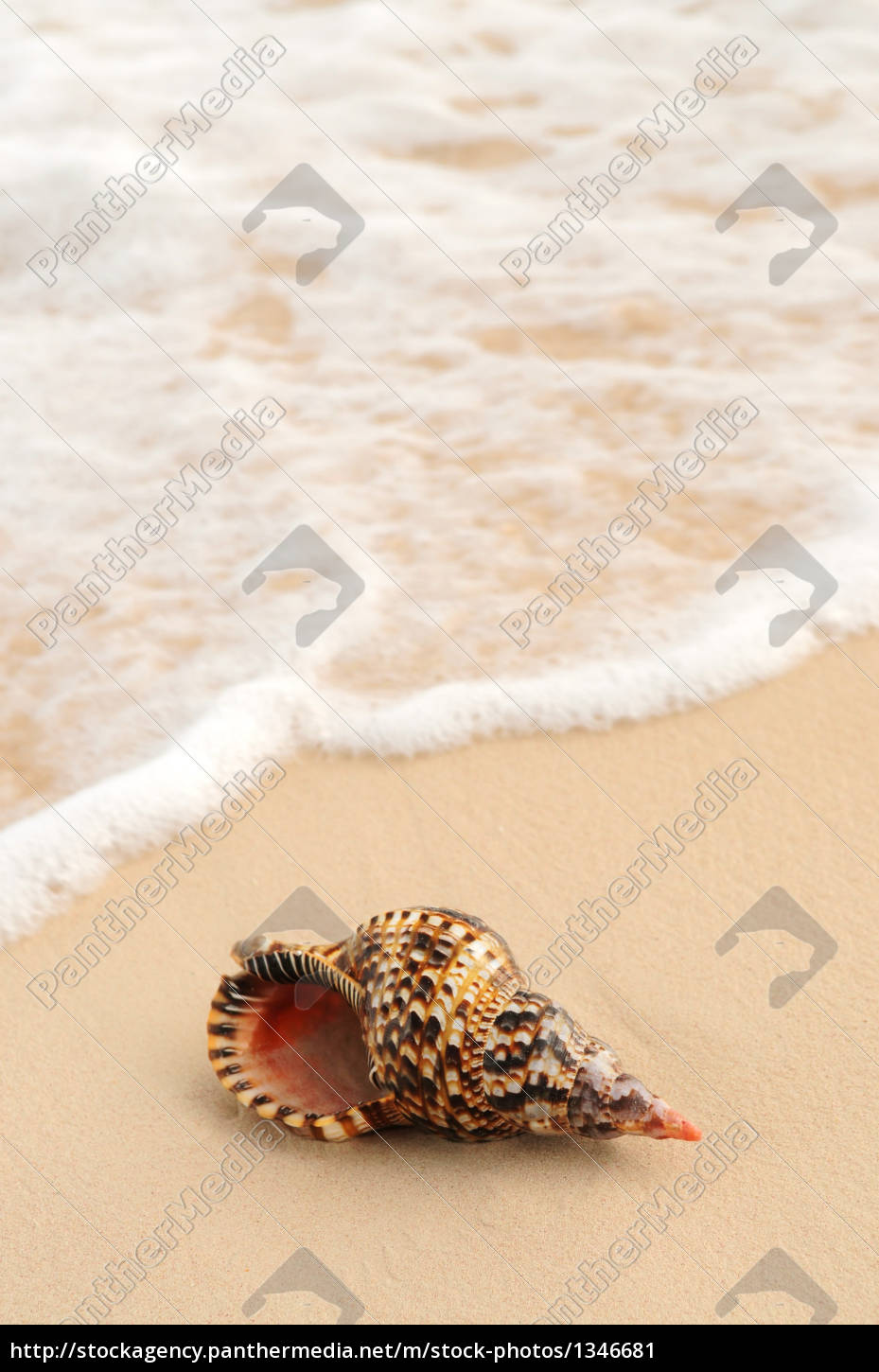 seashell, and, ocean, wave - 1346681