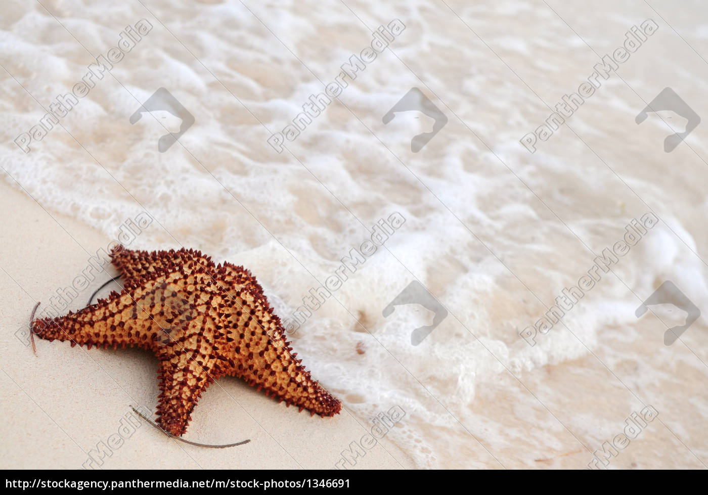 starfish, and, ocean, wave - 1346691
