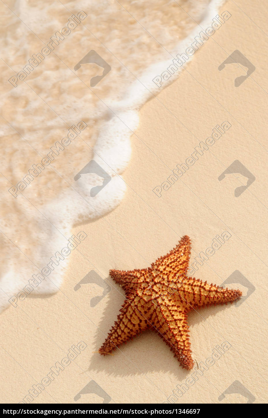starfish, and, ocean, wave - 1346697