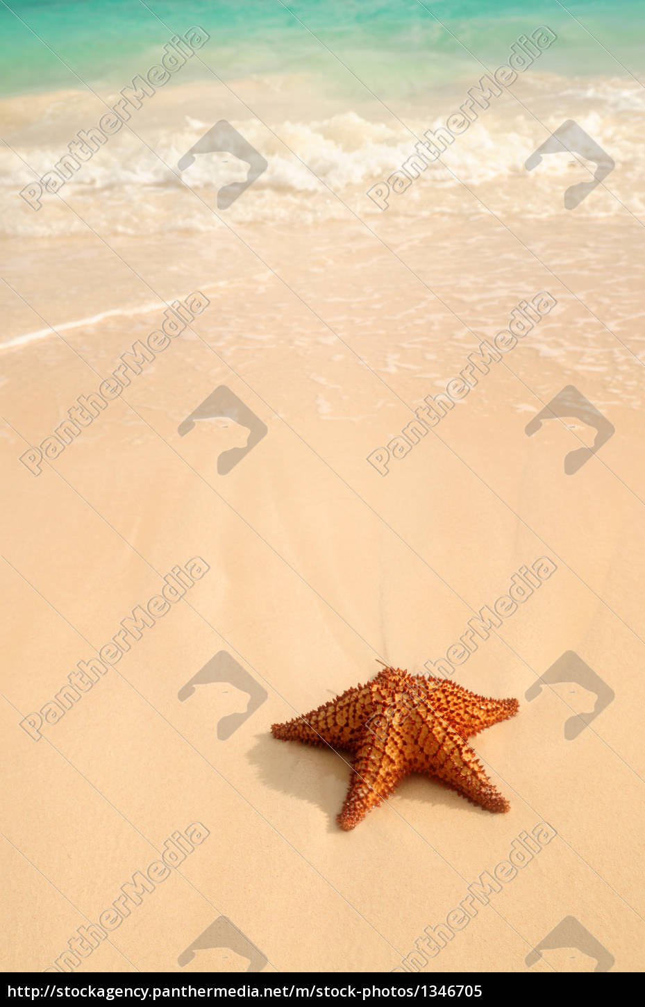 starfish, and, ocean, wave - 1346705