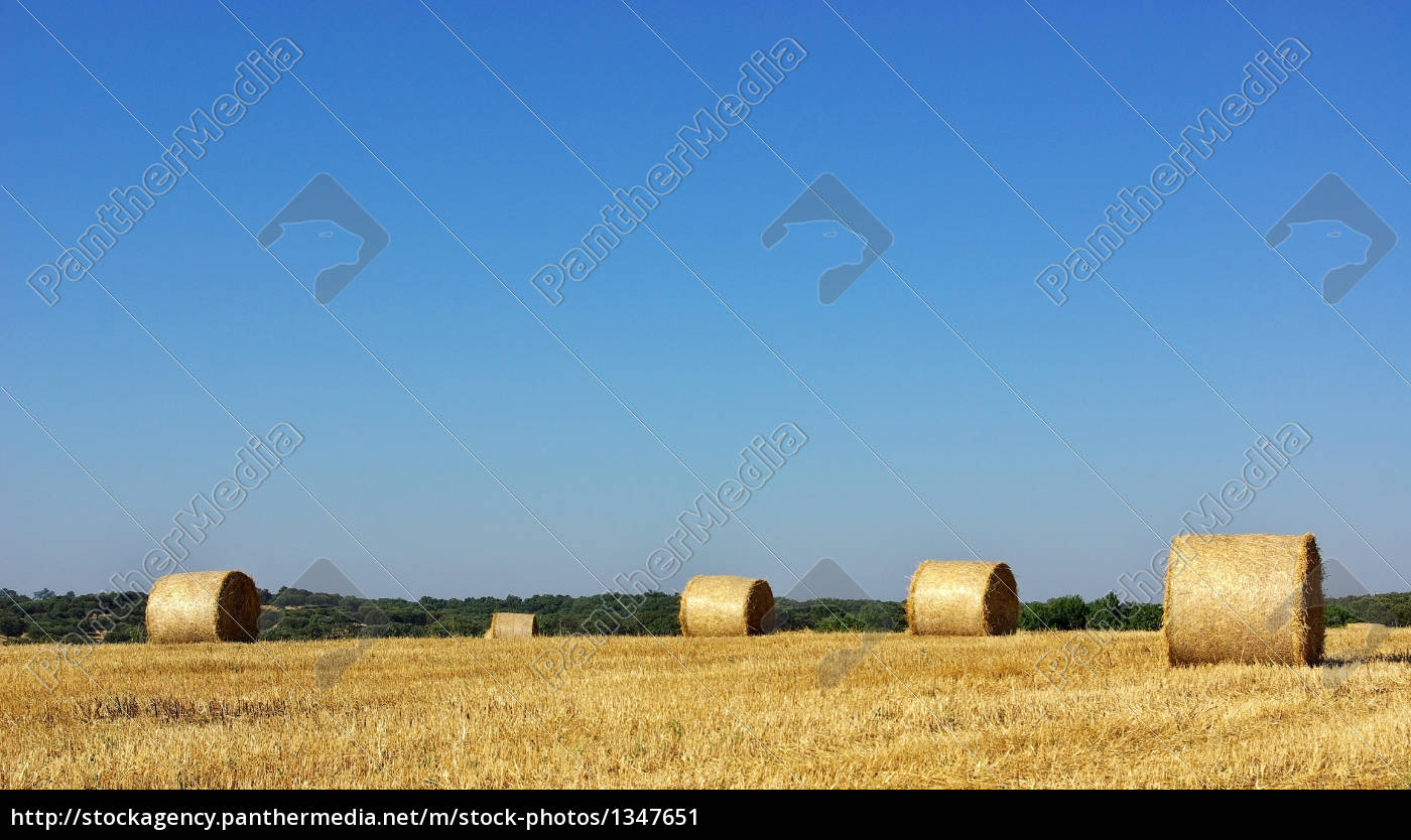 hay, bayle, in, the, field, of - 1347651