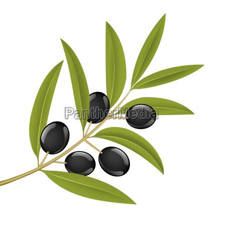 olive, branch - 1347075