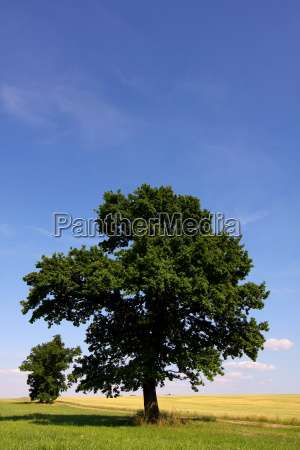 caspar david friedrich oak