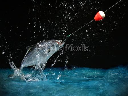 catching, a, big, fish, at, night - 1349391