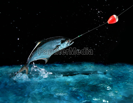 catching, a, big, fish, at, night - 1349393