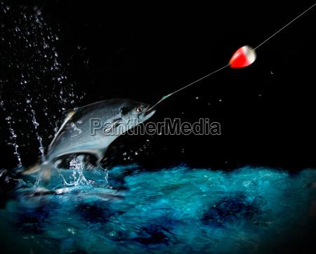 catching, a, big, fish, at, night - 1349403