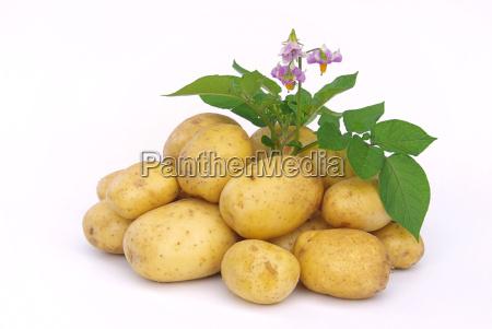 potato, -03 - 1349107