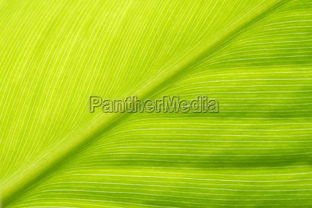 leaf - 1350719