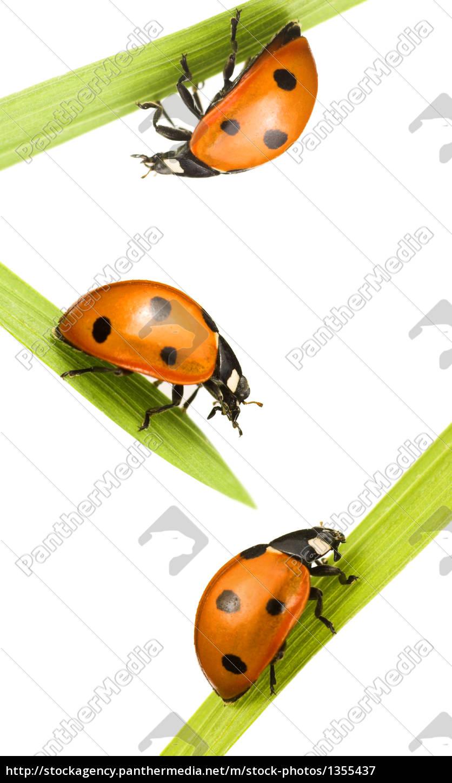 family, beetles - 1355437