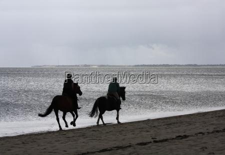 horse, riding, on, the, beach - 1357279