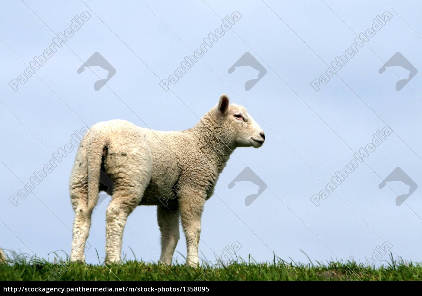 animal - 1358095