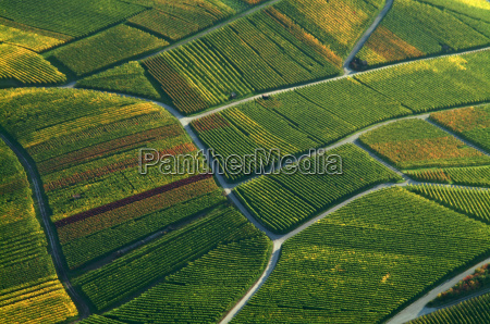 weinbaulandschaft aerial view