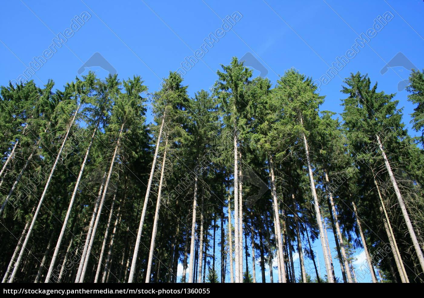 coniferous, forest - 1360055
