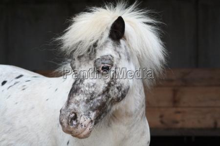 pony - 1362095