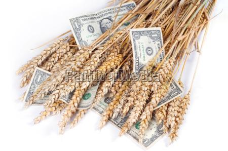rich, crop, -, ears, of, wheat - 1362213