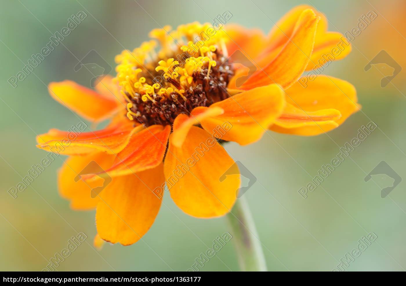 bloom, in, orange - 1363177