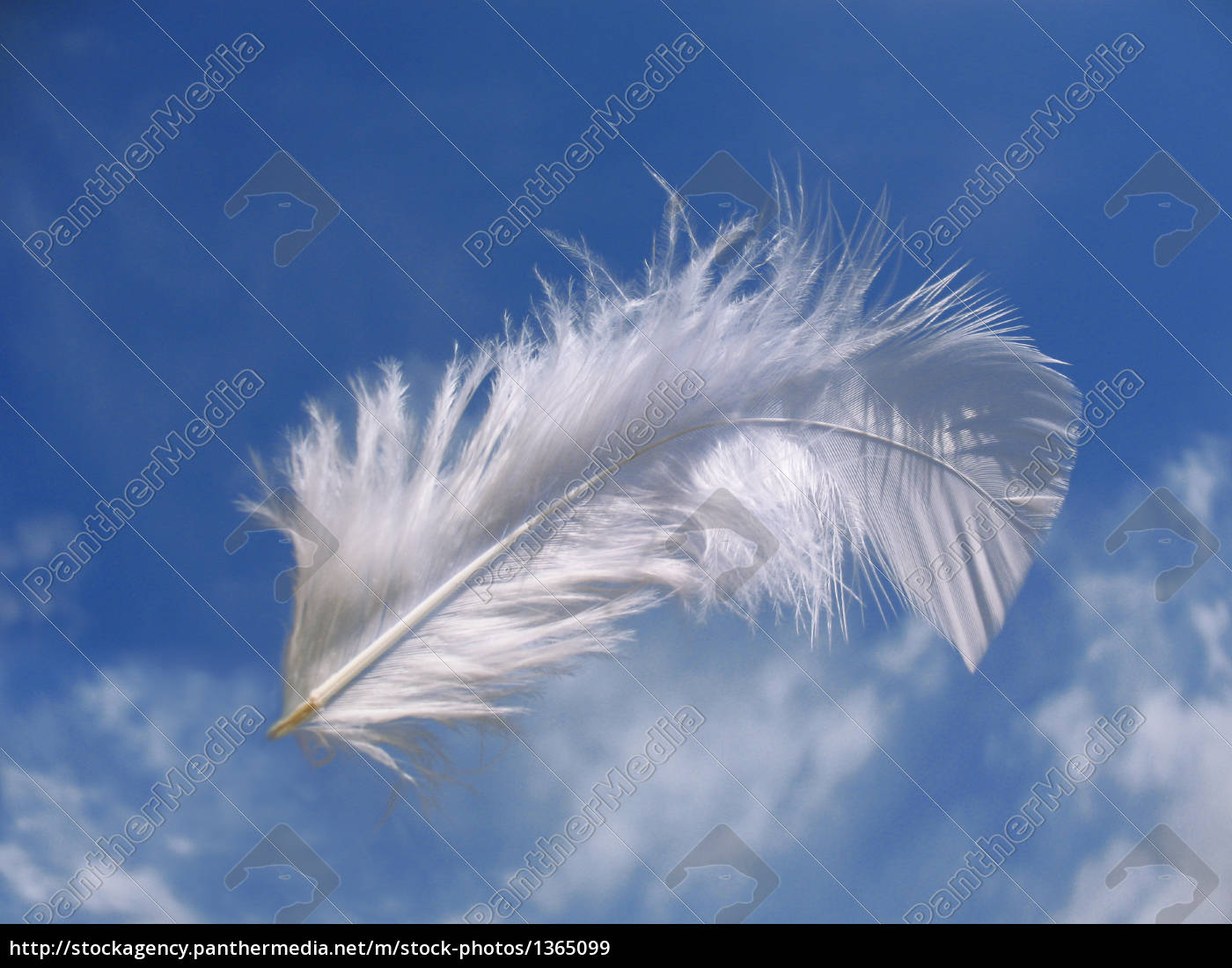 feather - 1365099